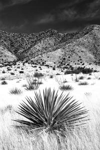 Desert Grasslands I BW by Douglas Taylor