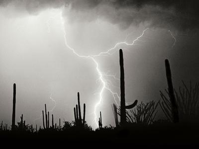 Electric Desert II BW by Douglas Taylor