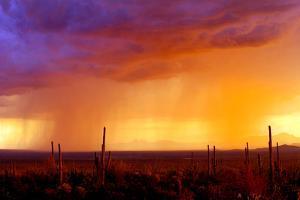 Evening Rain by Douglas Taylor