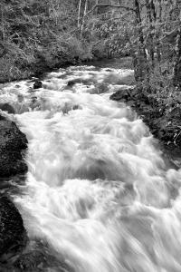 Hamma Hamma River BW by Douglas Taylor