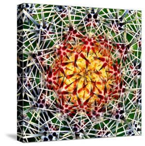 Saguaro Mandala II by Douglas Taylor