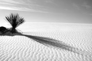 Shadows in the Sand I by Douglas Taylor