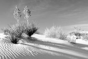 Shadows in the Sand II by Douglas Taylor
