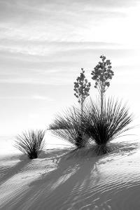 Yucca at White Sands II by Douglas Taylor