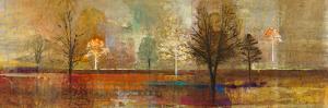 Tree Shadows I by Douglas