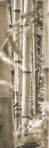 Bamboo Grove III by Douglas Yan