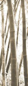 Bamboo Grove IV by Douglas Yan