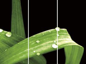 Grassy Dew by Douglas Yan