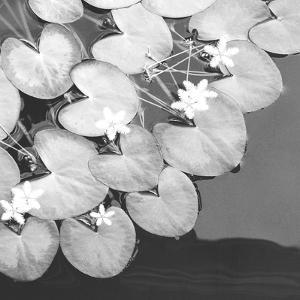 The Lily Pool B&W by Douglas Yan