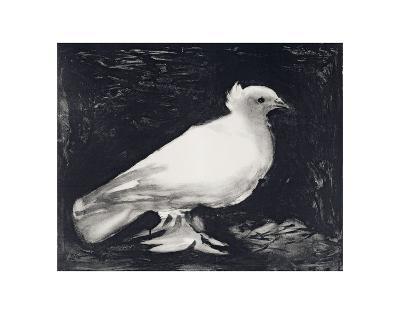 Dove, 1949-Pablo Picasso-Art Print