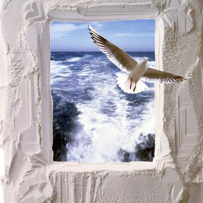 Dove Flying Toward Camera Through Plaster Frame with Ocean Waves in Background--Photographic Print