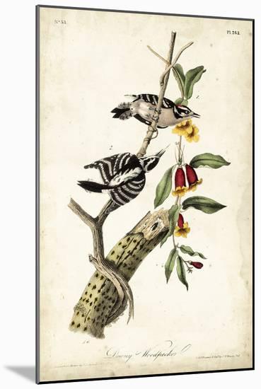 Downy Woodpecker-John James Audubon-Mounted Art Print