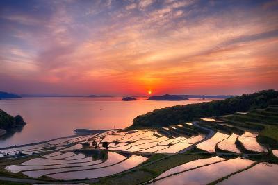 Doya Rice Terraces during Sunset-Agustin Rafael C. Reyes-Photographic Print