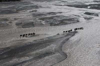 Dozens of Camels and Eight Drivers Haul Gear to Chinese Base Camp-Ralf Dujmovits-Photographic Print