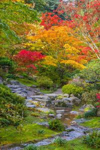 Fall Colors Rocky Stream by dplett