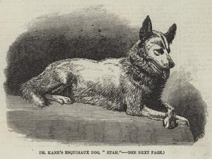 Dr Kane's Esquimaux Dog, Etah