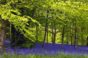 Cornwall Llanhydrock Gardens by Dr. Keith Wheeler
