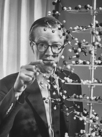 Dr. Maurice H.F. Wilkins Nobel Prize Winner with Model of Dna Molecule for Which He Received Prize--Premium Photographic Print