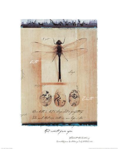 Dragon Fly-Julie Nightingale-Art Print
