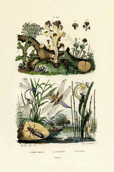 Dragonflies, 1833-39--Giclee Print