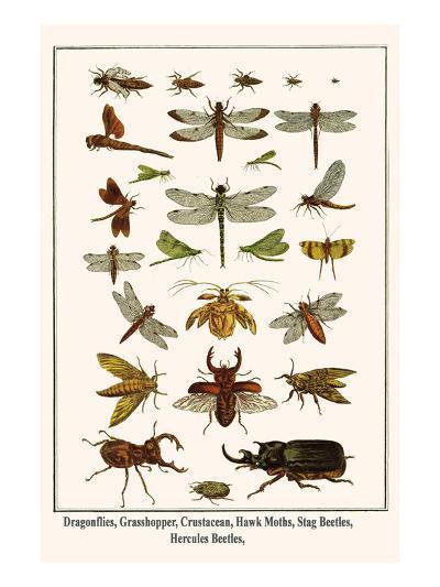 Dragonflies, Grasshopper, Crustacean, Hawk Moths, Stag Beetles, Hercules Beetles,-Albertus Seba-Art Print