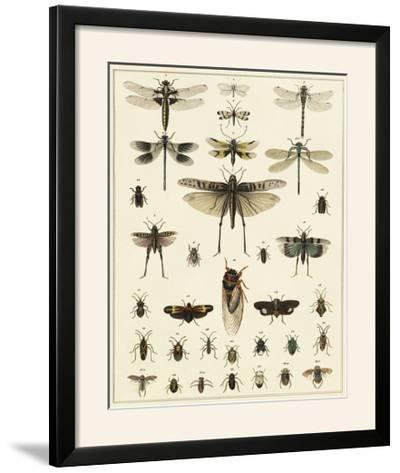 Dragonfly Display-Oken-Framed Photographic Print