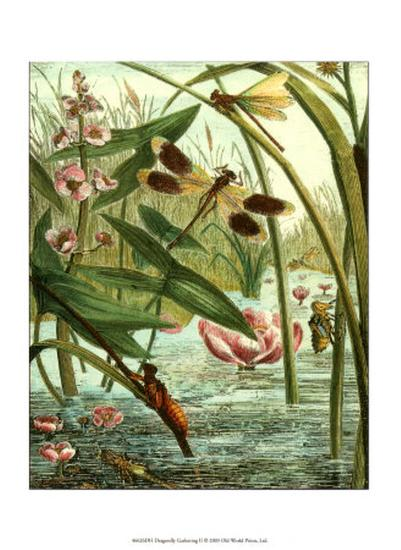 Dragonfly Gathering II--Art Print