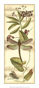 Dragonfly Gathering II