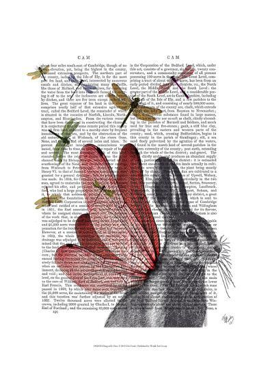 Dragonfly Hare-Fab Funky-Art Print