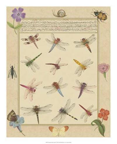 Dragonfly Manuscript II-Jaggu Prasad-Giclee Print