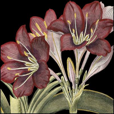 Dramatic Blossoms I-Vision Studio-Art Print