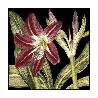 Dramatic Blossoms II-Vision Studio-Art Print