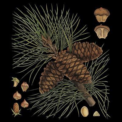 https://imgc.artprintimages.com/img/print/dramatic-conifers-v_u-l-p8kopj0.jpg?p=0