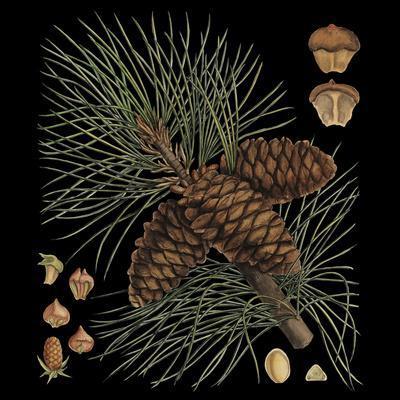 https://imgc.artprintimages.com/img/print/dramatic-conifers-v_u-l-pxn0dw0.jpg?p=0