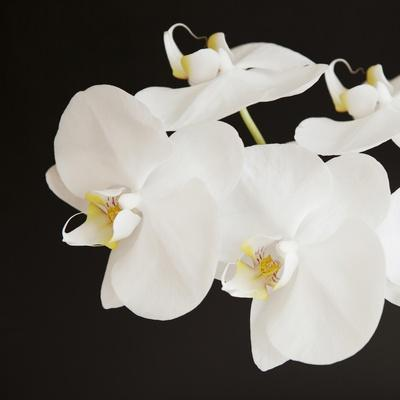 https://imgc.artprintimages.com/img/print/dramatic-orchid-2_u-l-q13iiqa0.jpg?p=0