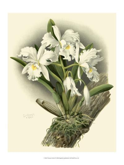 Dramatic Orchid I-Chas Storer-Art Print