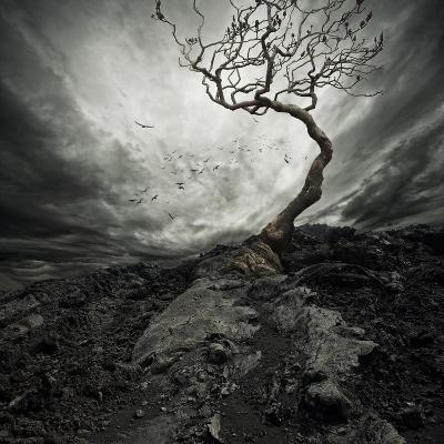 Dramatic Sky Over Old Lonely Tree-NejroN Photo-Art Print