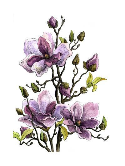 Drawing Branch of a Blossoming Magnolia . Paper, Water Color, H-vodolej-Art Print