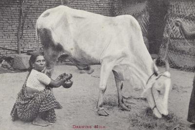 Drawing Milk--Photographic Print