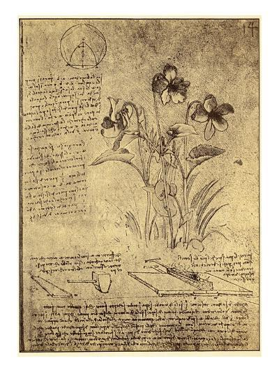 Drawing of Flowers and Diagrams by Leonardo da Vinci-Bettmann-Giclee Print