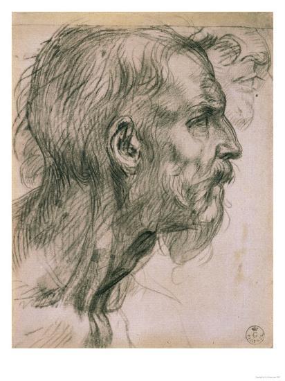 Drawing with Male Profile, in the Uffizi Gallery, in the Gabinetto Dei Disegni E Delle Stampea-Andrea del Sarto-Giclee Print