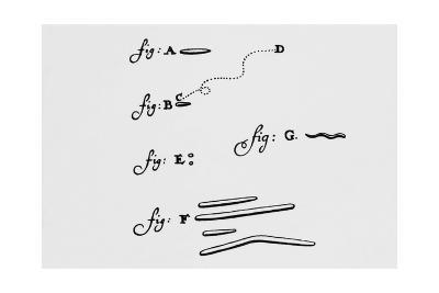 Drawings of Animalcules Form Leeuwenhoek's Letter-Jeremy Burgess-Giclee Print