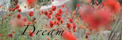 Dream Flowers II-Nicole Katano-Photo