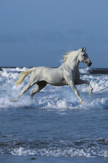 Dream Horses 001-Bob Langrish-Photographic Print