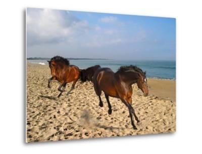 Dream Horses 002-Bob Langrish-Metal Print