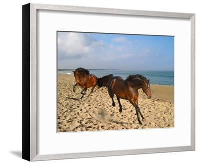 Dream Horses 002-Bob Langrish-Framed Photographic Print