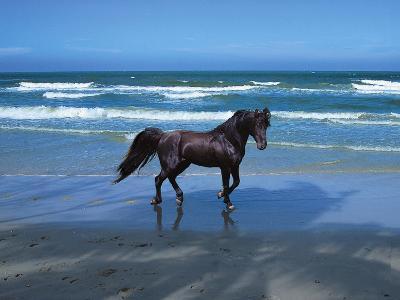 Dream Horses 004-Bob Langrish-Photographic Print