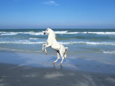 Dream Horses 006-Bob Langrish-Photographic Print