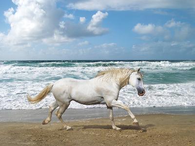 Dream Horses 008-Bob Langrish-Photographic Print