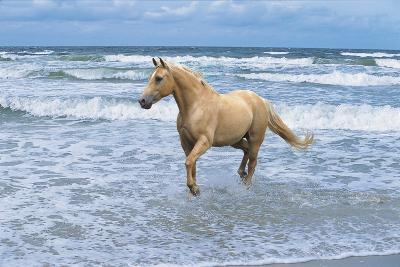 Dream Horses 009-Bob Langrish-Photographic Print